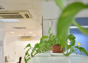 Beneficios de tener plantas en tu coworking